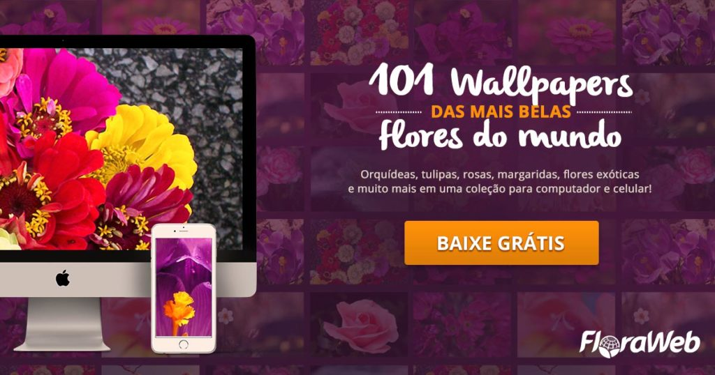 baixe-o-kit-com-101-wallpapers-das-mais-belas-flores