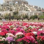 israel flor