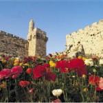 israel flor 2