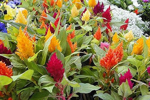 Clima seco na sua cidade veja as flores mais resistentes for Plantas para pleno sol