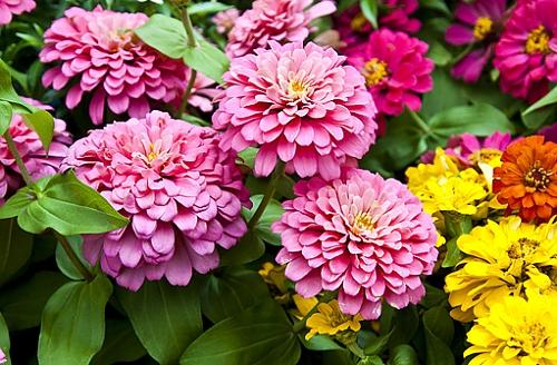 plantas jardim de sol: seco na sua cidade? Veja as flores mais resistentes!