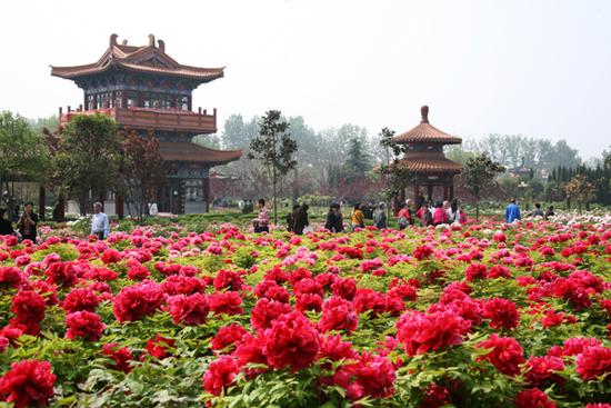 china flowers blog