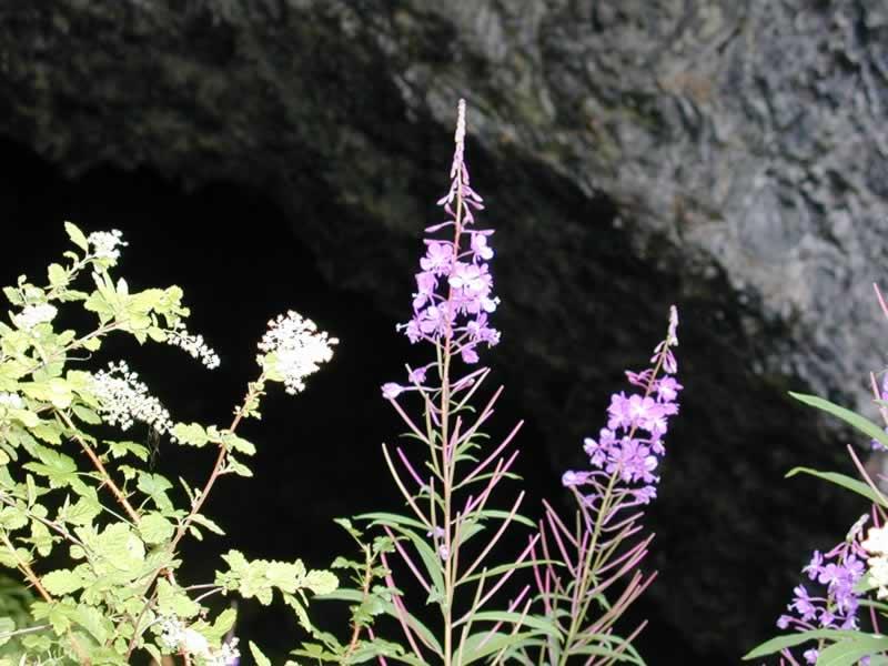 Boca Cave Flowers_JPG