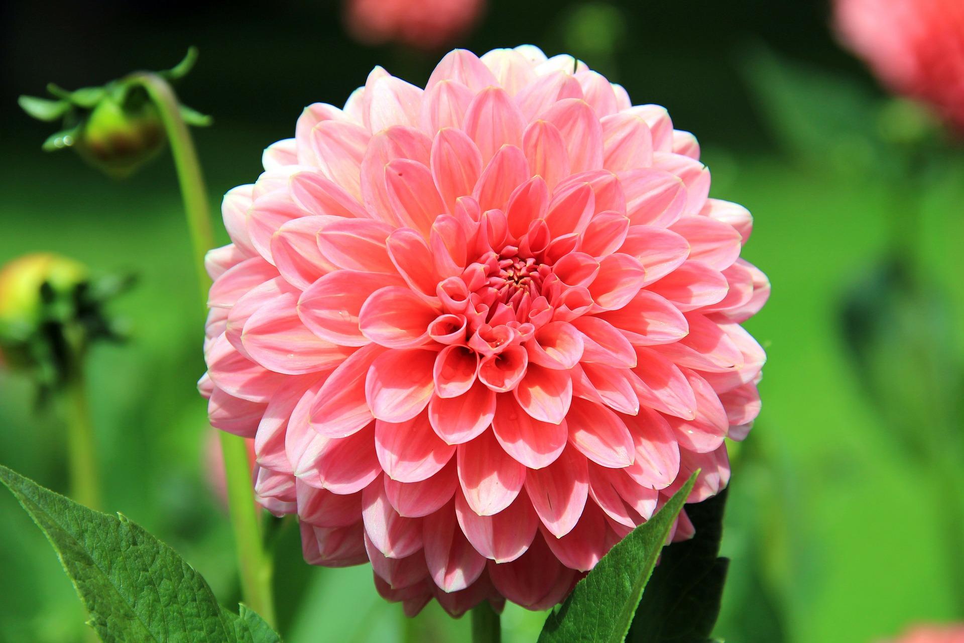 Flores Mais Bonitas Do Verão Plante No Seu Jardim Flores