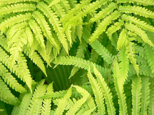 Flores e plantas para purificar o ambiente