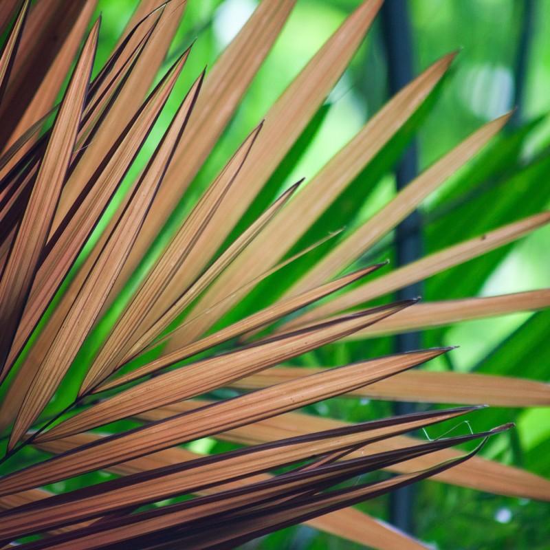 O charme e a elegância das palmeiras