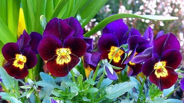 Flores mais bonitas do inverno