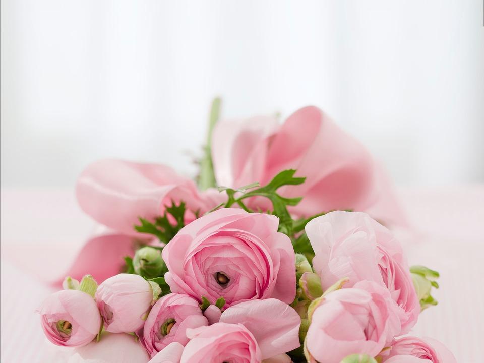 roses-142876_960_720