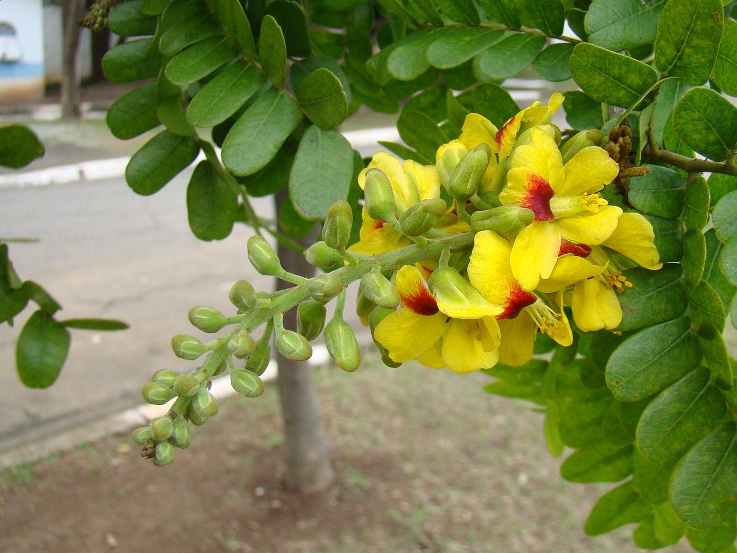 flores em extinção