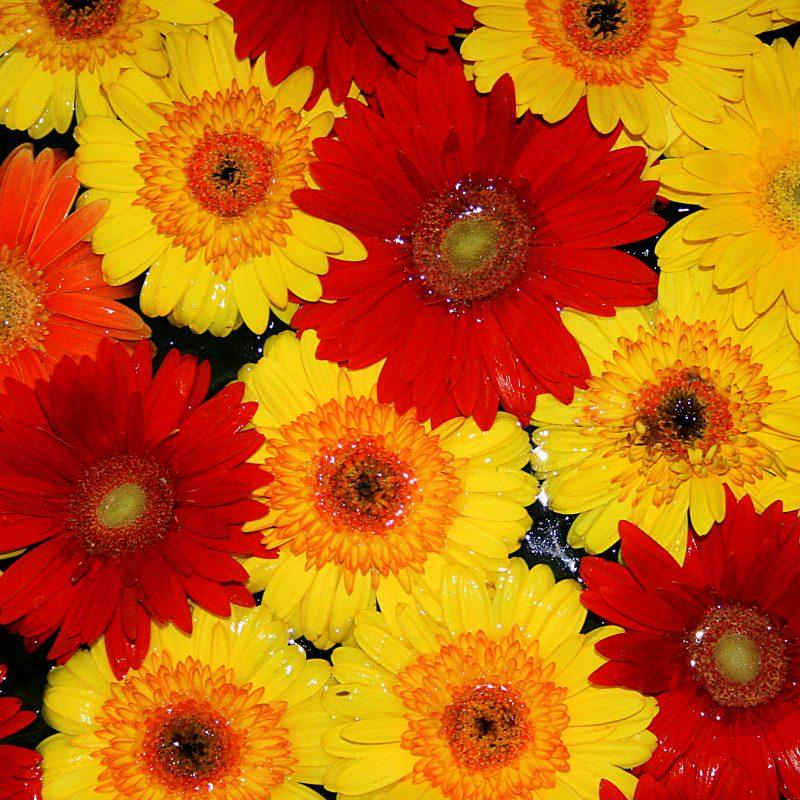 Flores para o carnaval: dicas de como usá-las para aproveitar a folia
