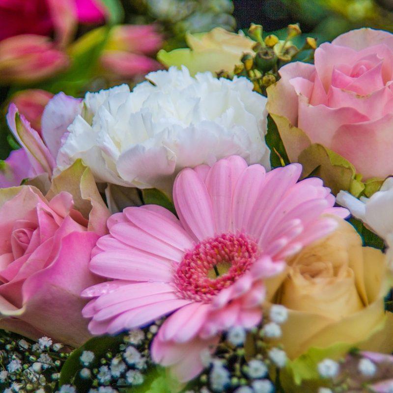5 flores e as ocasiões para presentear: acerte na escolha!