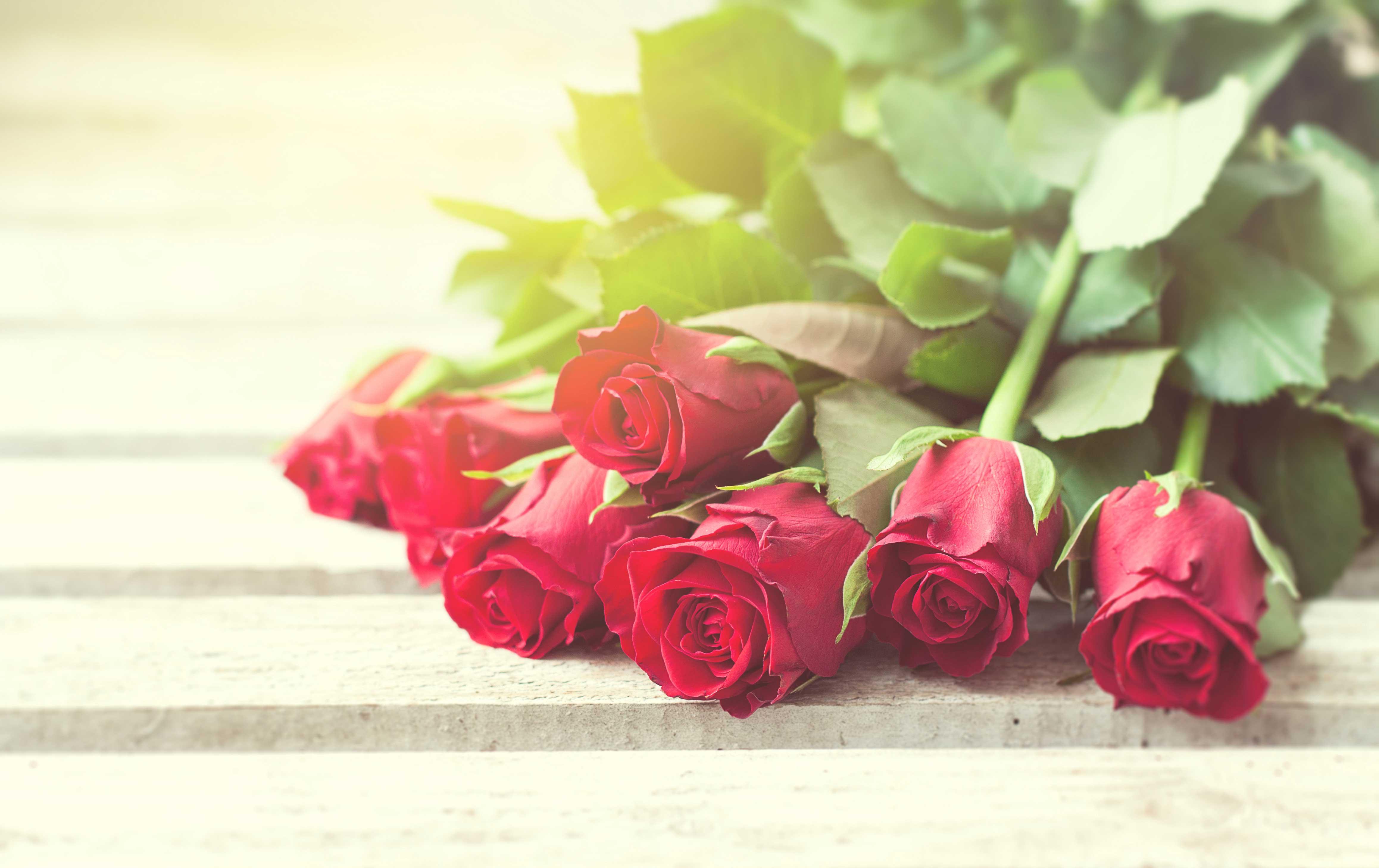 Rosas-para-presentear