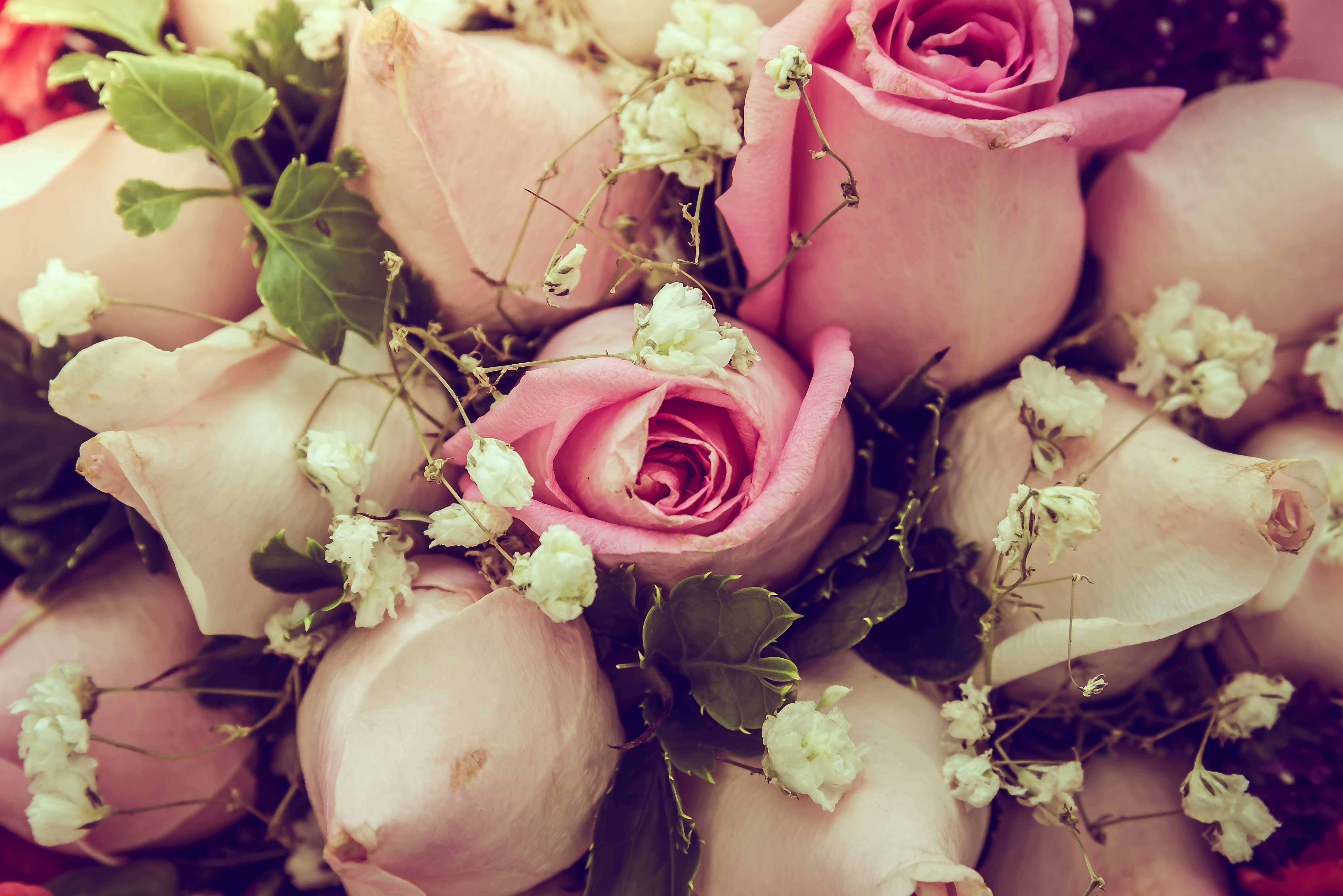 Rosas-para-presentear2
