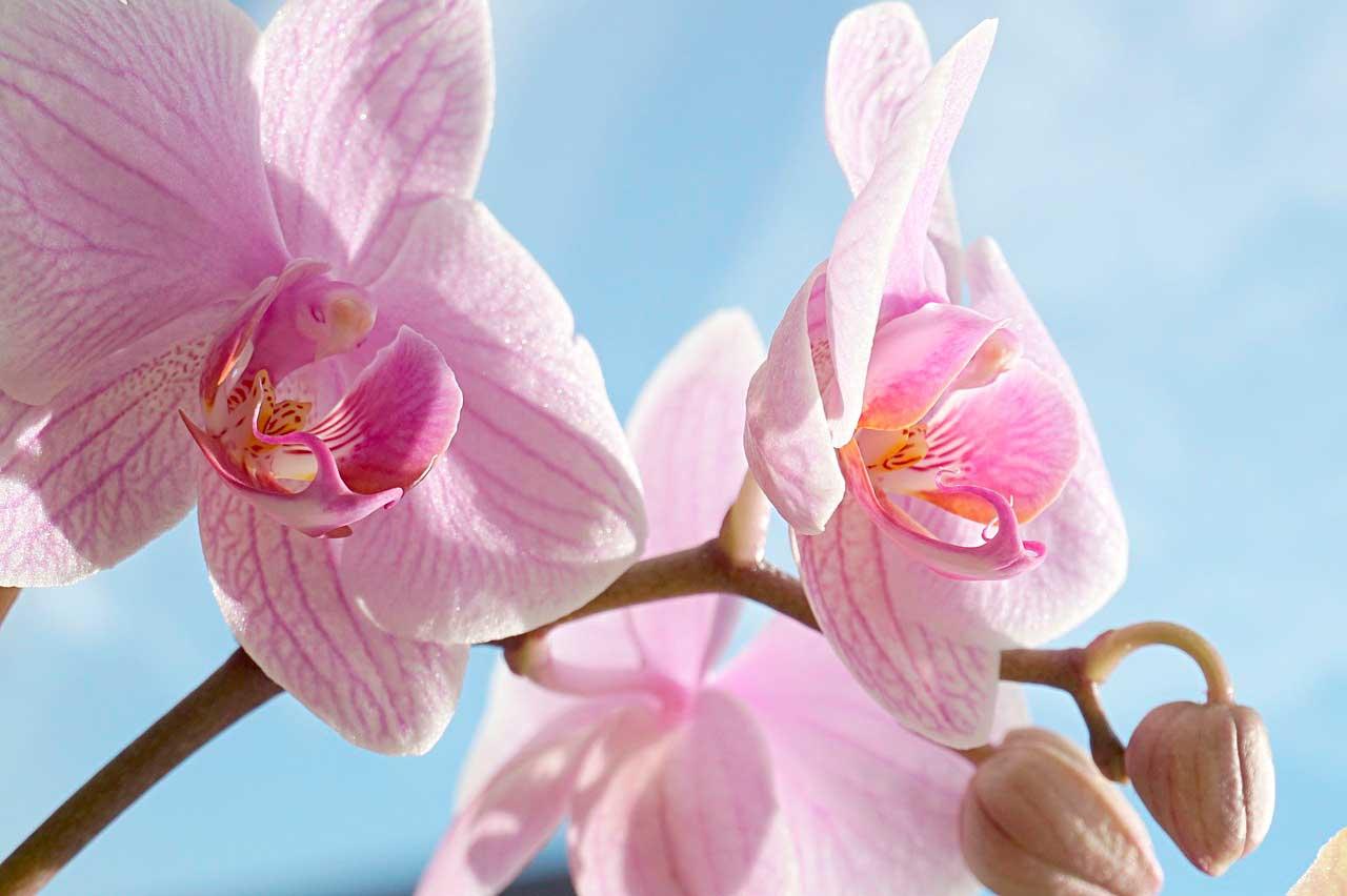 Flores-do-nordeste-do-Brasil