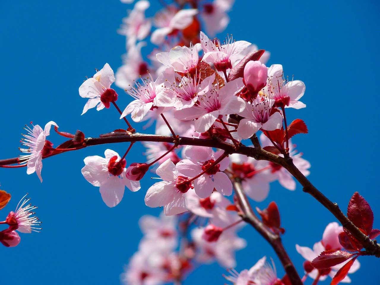 flores da primavera no exterior
