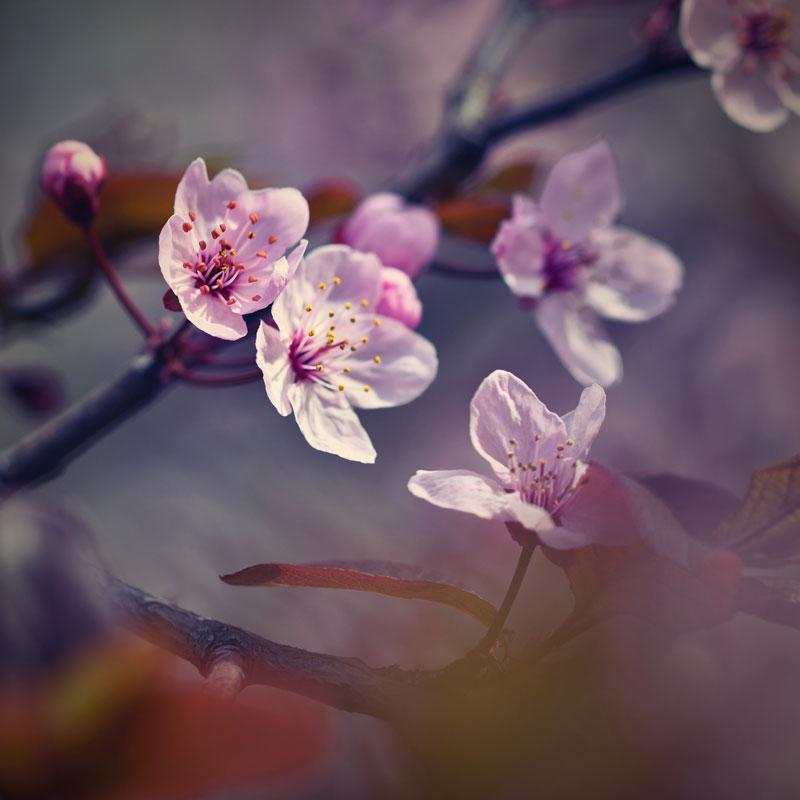 flores do verão no hemisfério norte