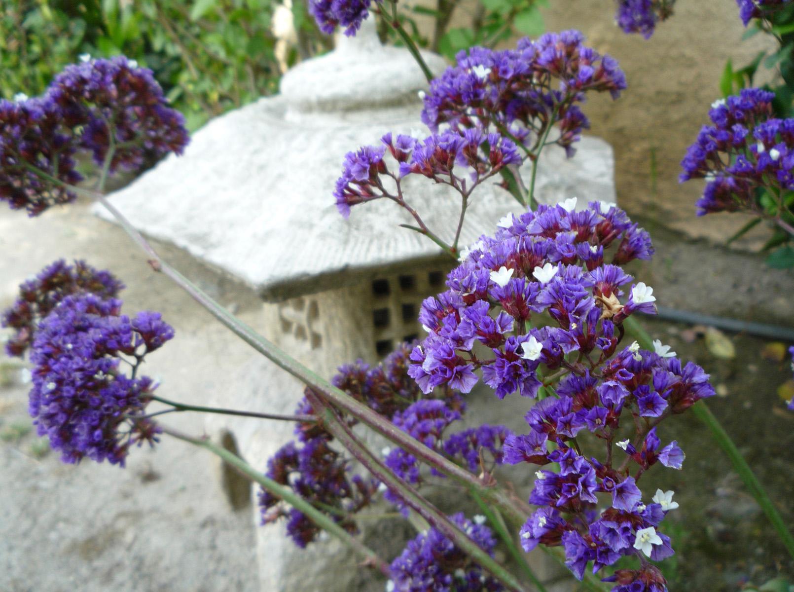 historia das violetas