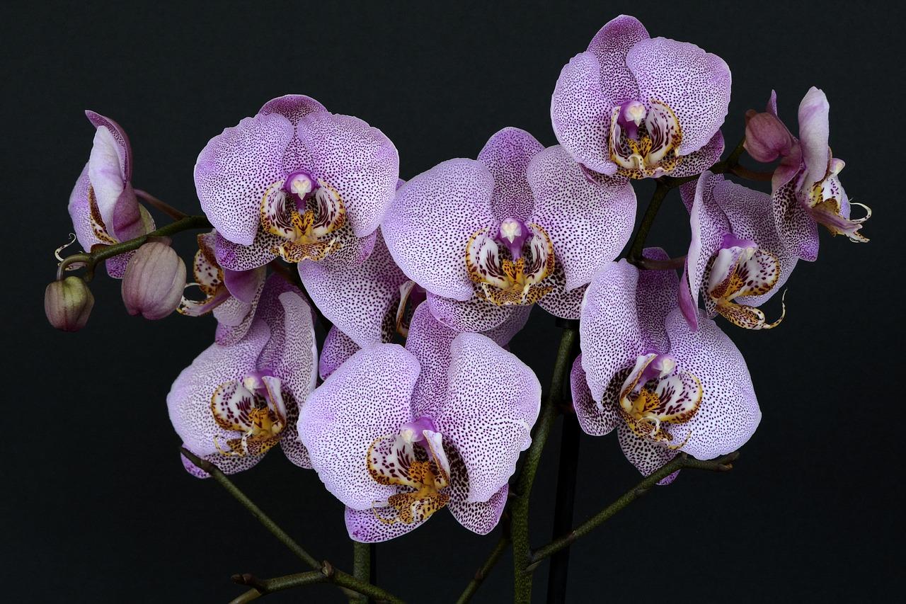 dicas sobre orquídeas